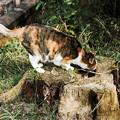 写真: 猫撮り散歩2178