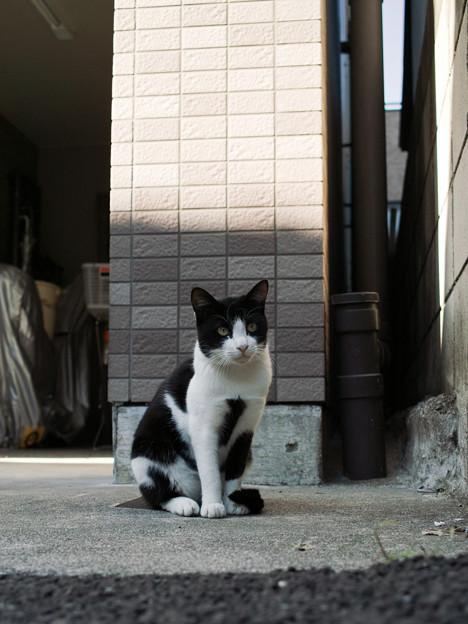 写真: 猫撮り散歩2186