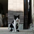 Photos: 猫撮り散歩2186