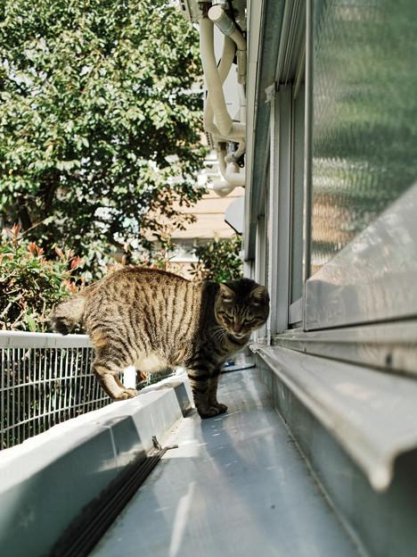 猫撮り散歩2189