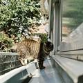 写真: 猫撮り散歩2189