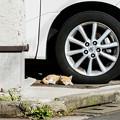 写真: 猫撮り散歩2190