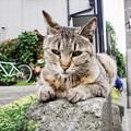写真: 猫撮り散歩2191