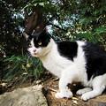 写真: 猫撮り散歩2193