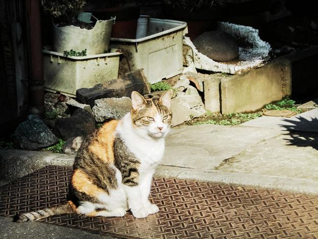 猫撮り散歩2194