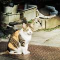 写真: 猫撮り散歩2194