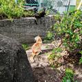 写真: 猫撮り散歩2203