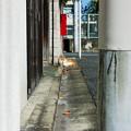 写真: 猫撮り散歩2205