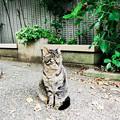 猫撮り散歩2206