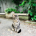 写真: 猫撮り散歩2206