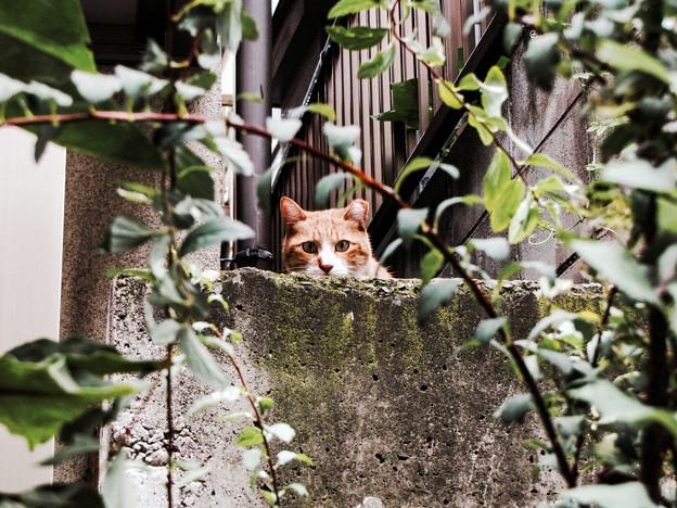 猫撮り散歩2208