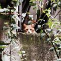 写真: 猫撮り散歩2208