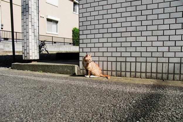 写真: 猫撮り散歩2215
