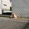 Photos: 猫撮り散歩2215