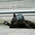 猫撮り散歩2216