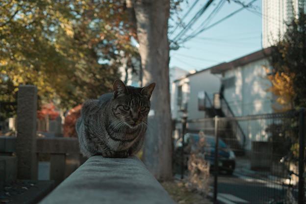 猫撮り散歩2219