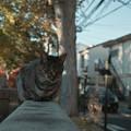 写真: 猫撮り散歩2219