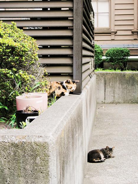 猫撮り散歩2220