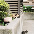 写真: 猫撮り散歩2220
