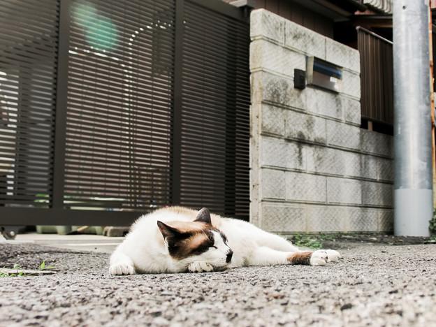 猫撮り散歩2221