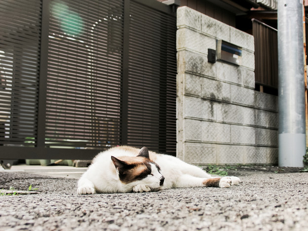 Photos: 猫撮り散歩2221