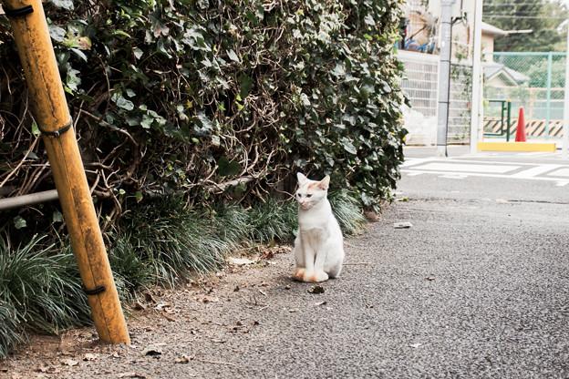 猫撮り散歩2224