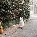 写真: 猫撮り散歩2224