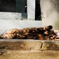 写真: 猫撮り散歩2227