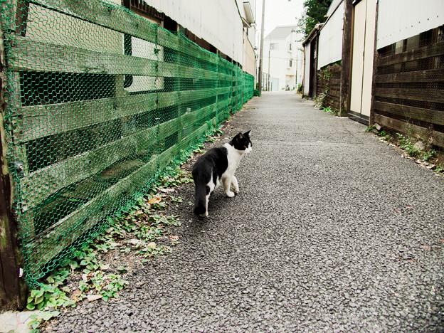 猫撮り散歩2228