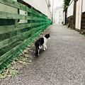 写真: 猫撮り散歩2228