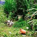 写真: 猫撮り散歩2230
