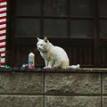 猫撮り散歩2232