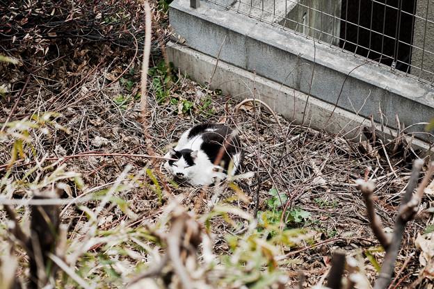 猫撮り散歩2233