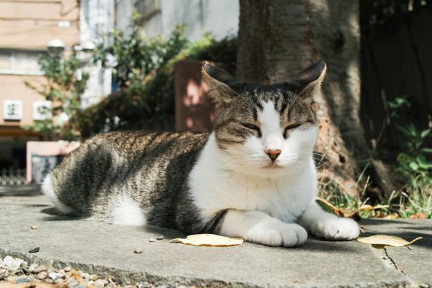 猫撮り散歩2235