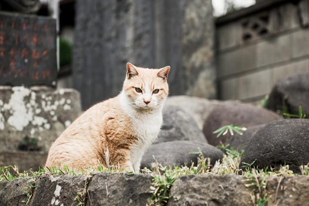 猫撮り散歩2239