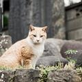 写真: 猫撮り散歩2239