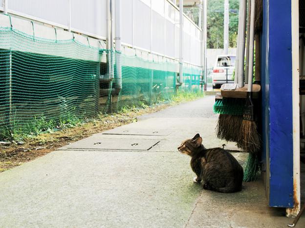 猫撮り散歩2240