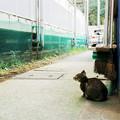 写真: 猫撮り散歩2240