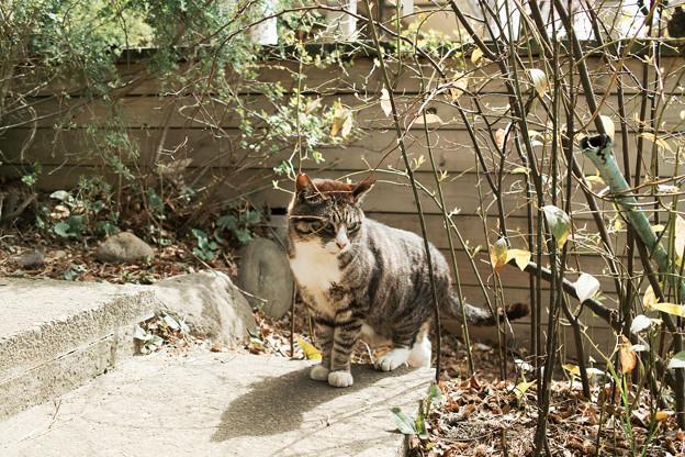 猫撮り散歩2242