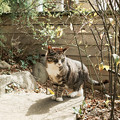 写真: 猫撮り散歩2242