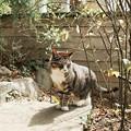 Photos: 猫撮り散歩2242
