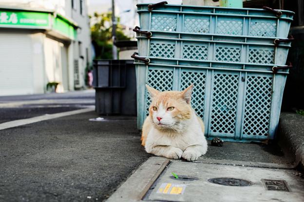 猫撮り散歩2243