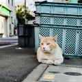 写真: 猫撮り散歩2243