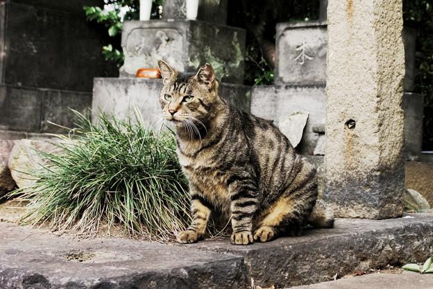 猫撮り散歩2244
