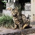 写真: 猫撮り散歩2244