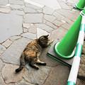 写真: 猫撮り散歩2246