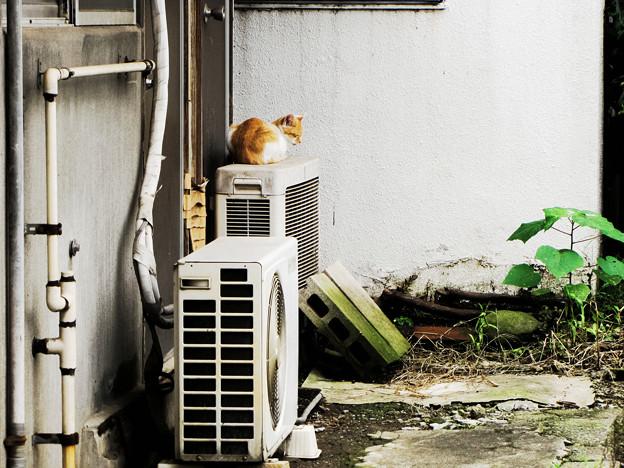 猫撮り散歩2247