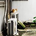 写真: 猫撮り散歩2247