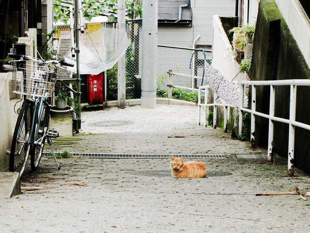 猫撮り散歩2252