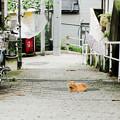 写真: 猫撮り散歩2252